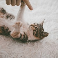 cat-4803841_1920