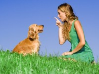 8 basic dog training tips every owner should know