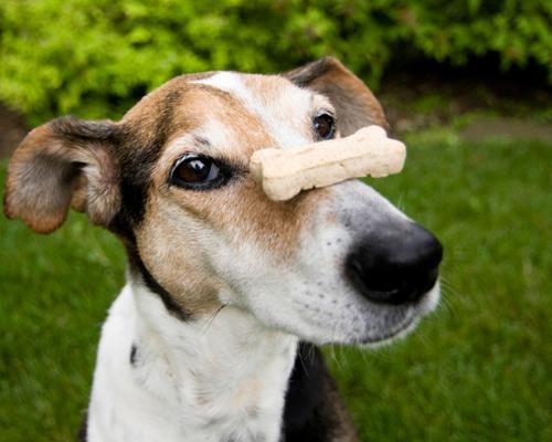 How Many Dog Training Treats Per Day