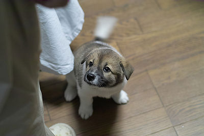 puppy wagging his tail