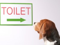 9 tips on how to potty train or house train a puppy