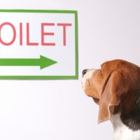 dog looking at the toliet sign