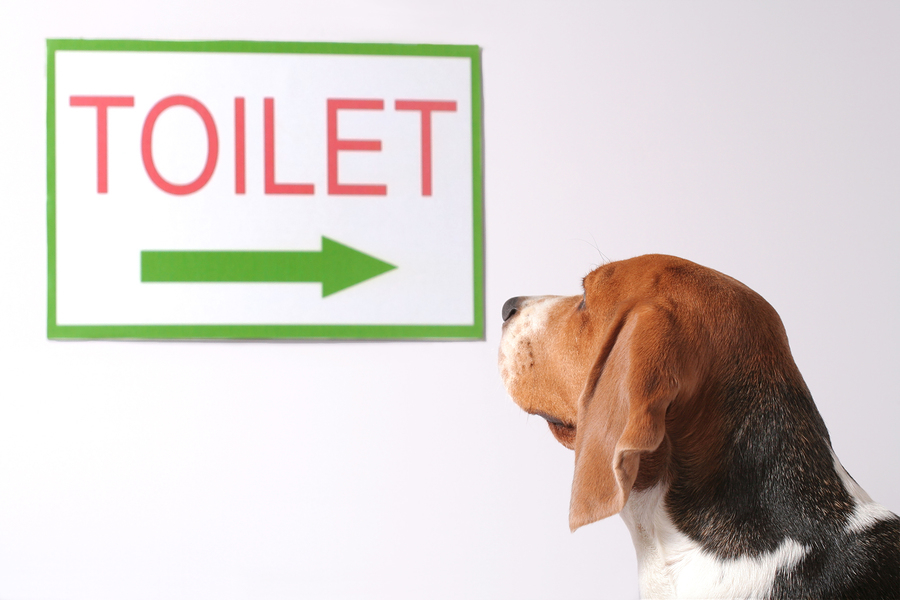 Exceptional Dog Looking At The Toliet Sign
