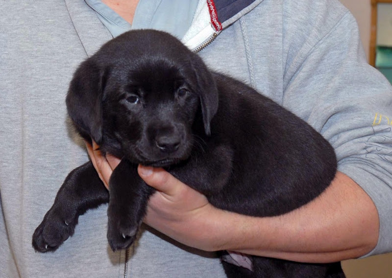 man holding a black puppy