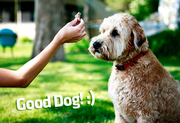 giving treat to a puppy and saying good dog