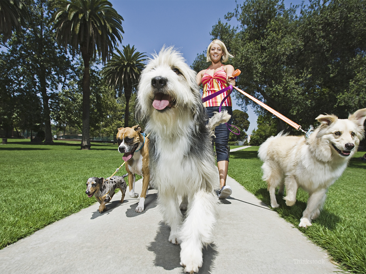 How Do I Set Up A Dog Walking Business