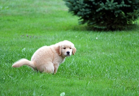puppy going potty outside