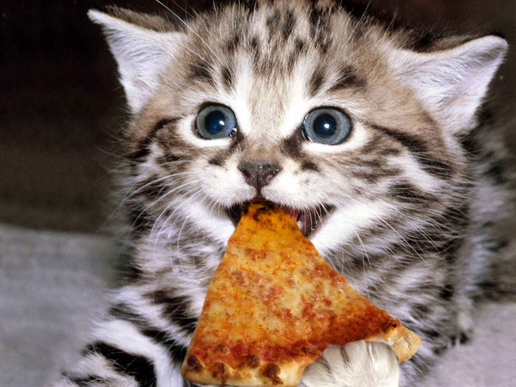 small kitten eating a piece of pizza