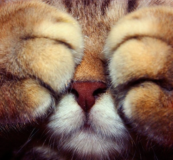 cat covering his eyes with paws