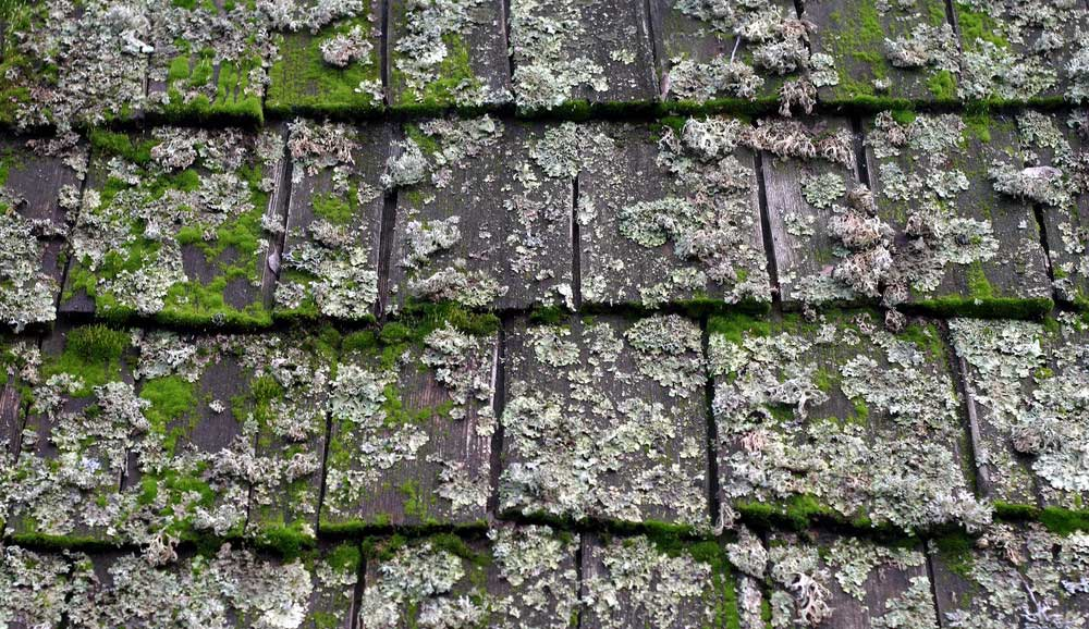 moss and algae on roof