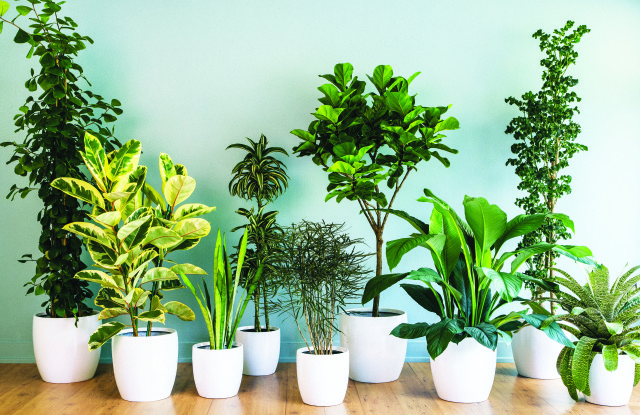 Many Houseplants On Floor In White Pots
