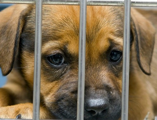 Image result for sad shelter puppy picture