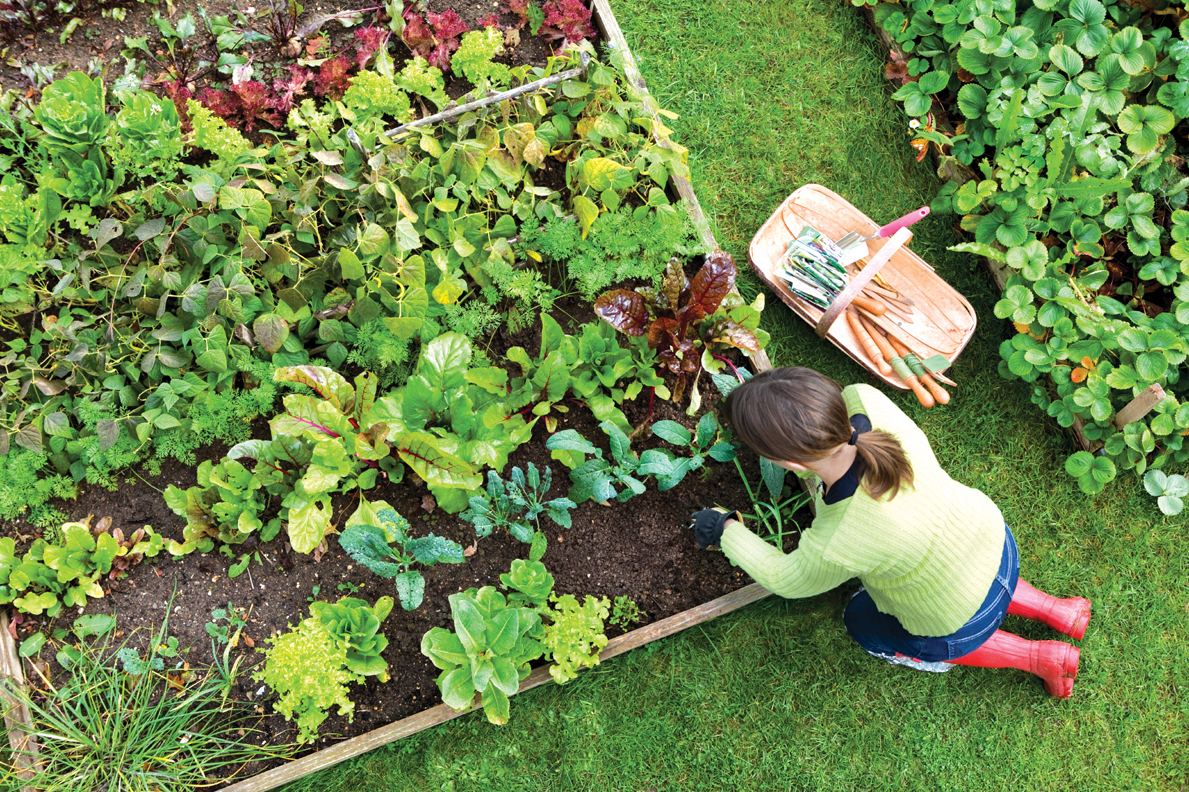 how to start a vegetable garden  hirerush blog, Natural flower