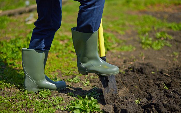 ... Man Digging The Soil For Vegetable Garden