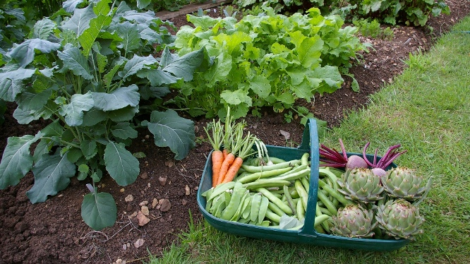 vegetable garden - How To Start A Vegetable Garden From Scratch