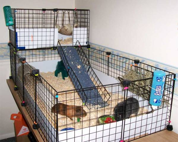 How to take care of guinea pigs hirerush blog for Guinea pig cage for 3
