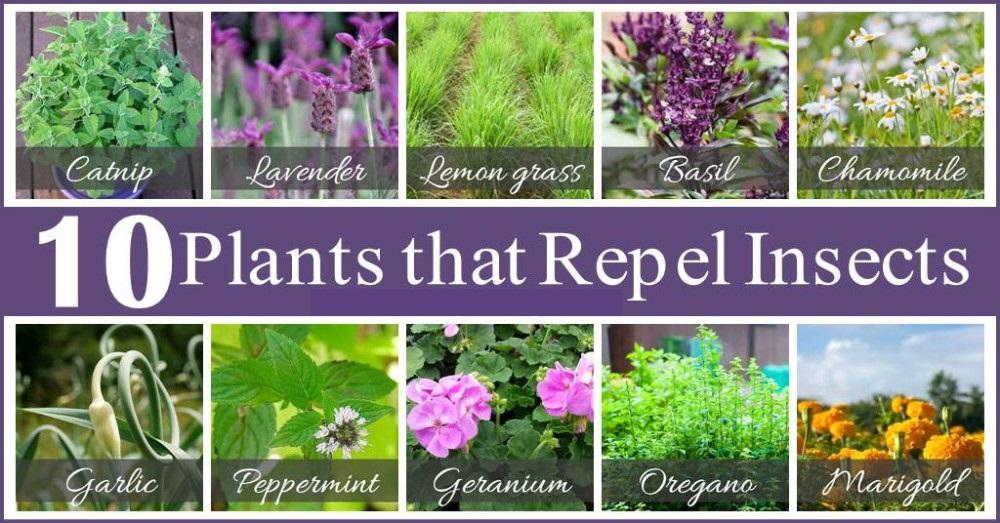 10 Easy Garden Pest Control Tips Hirerush Blog