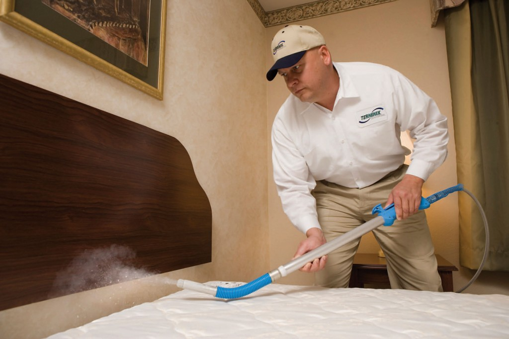 How To Get Rid Of Bed Bugs For Good Hirerush Blog