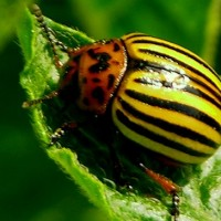 garden insects pest control
