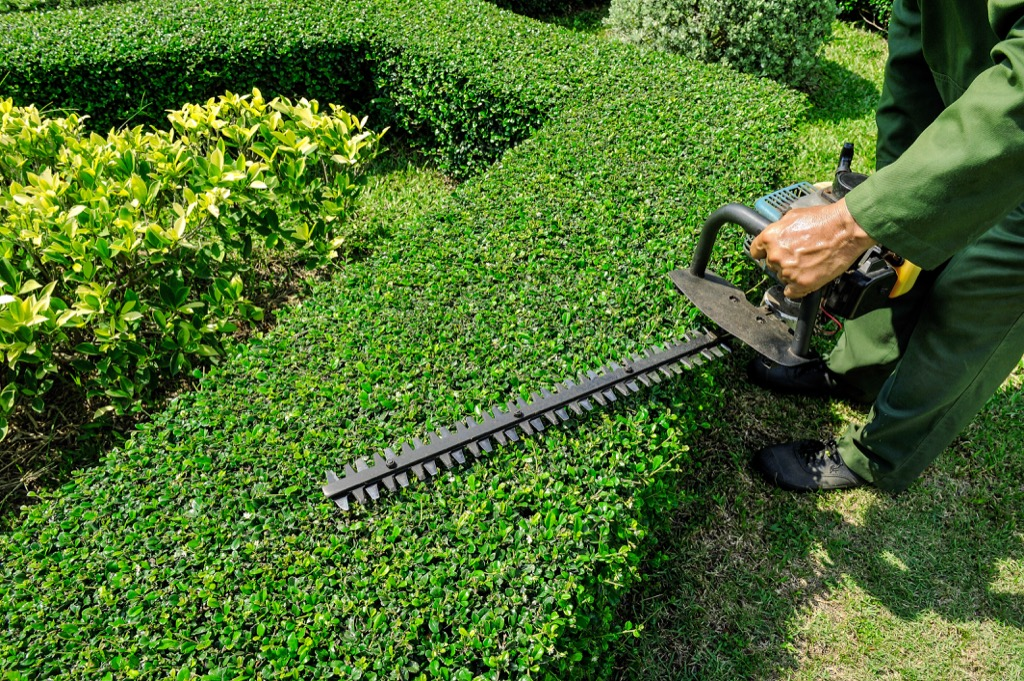 How To Trim Bushes And When Is The Best Time To Trim Hirerush
