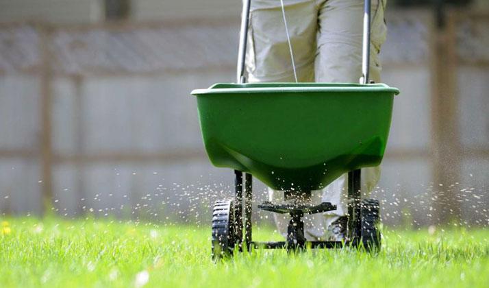 man feeding the lawn