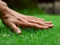 How to Get Grass to Grow Better   Lawn Improvement