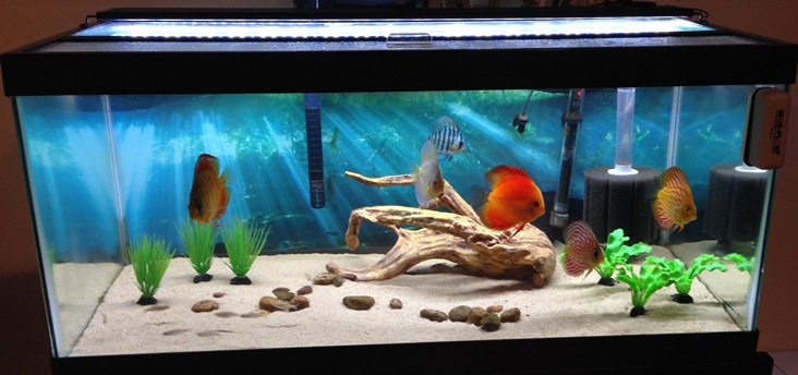 How to clean a fish tank hirerush blog for How to keep fish tank clean without changing water