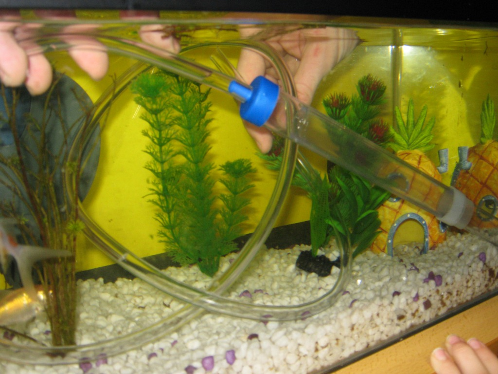 How to clean a fish tank hirerush blog for Clean fish tank