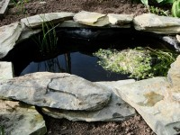 How to build a pond in your garden