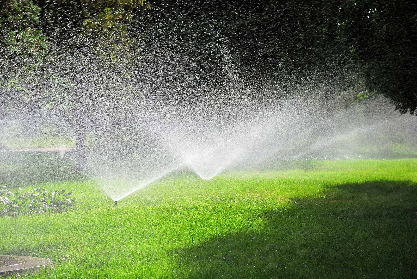 Summer Lawn Care Watering Mowing Etc Hirerush Blog