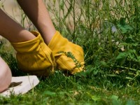 Summer lawn care | watering, mowing, etc.