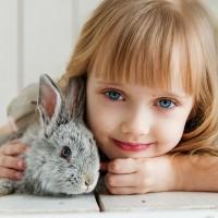 rabbit-3660673_1920 (1)