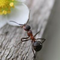 ant-954015_1920