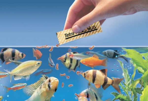 How to choose compatible fish for aquarium hirerush blog for How often should you clean a fish tank