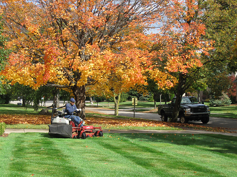 Fall lawn care steps and tips hirerush blog - Autumn lawn care advice ...