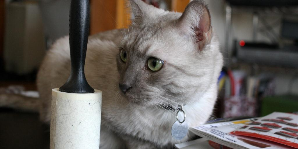 Kitten Supplies Must Haves To Get For Your Pet Hirerush