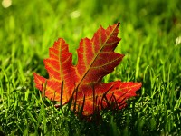 The most essential fall lawn care tips