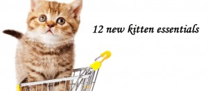 kitten in shopping cart