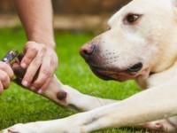 Painless way to trim dog nails (black or white)