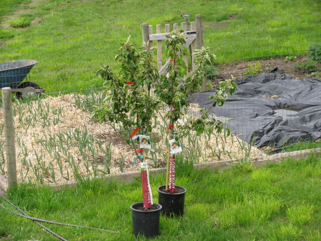 10 fall gardening tips and hacks hirerush blog - Planting fruit trees in autumn ...