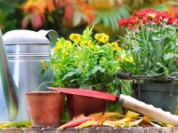 10 things your garden wants you to do this fall
