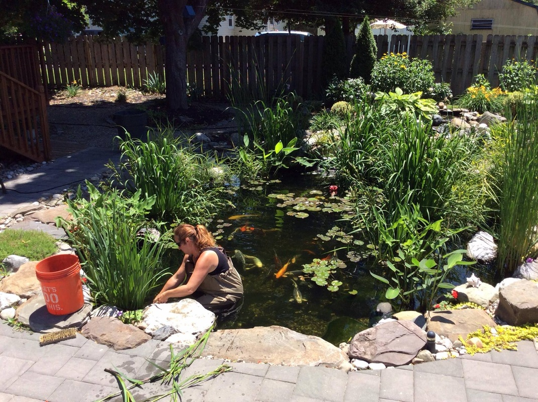 Charmant ... Woman Cleaning Koi Pond