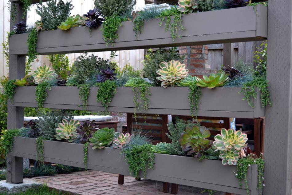 backyard succulent wall