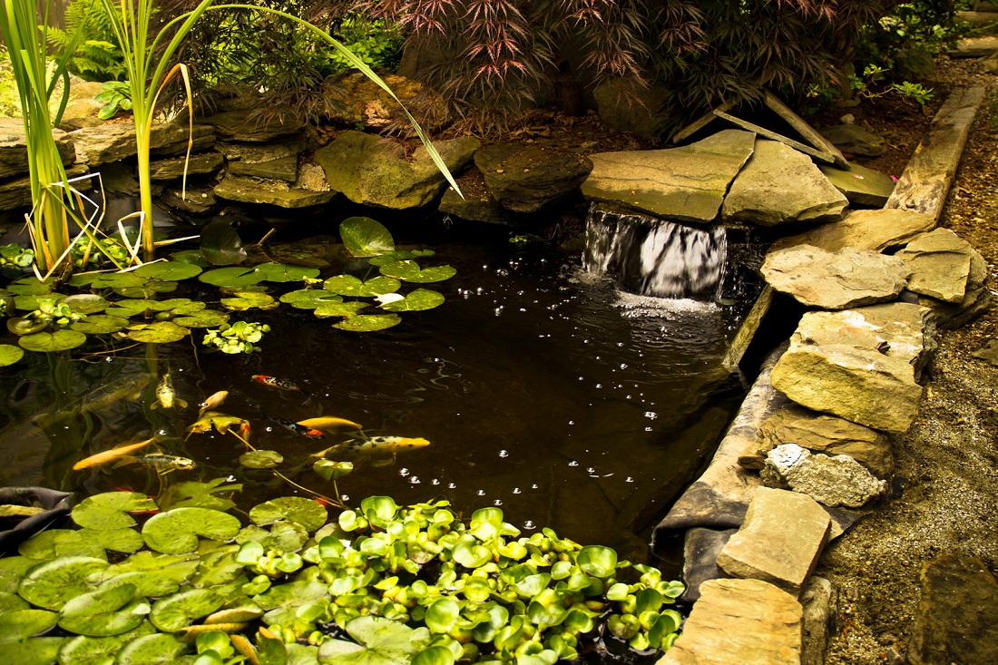 Koi pond maintenance keep your pond live and healthy for Koi pond pics