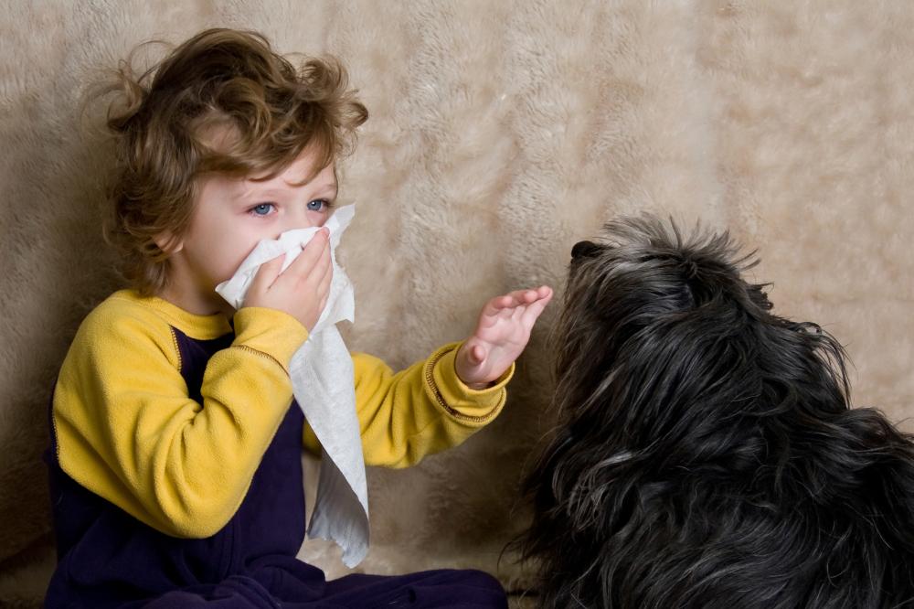 kid sneezing next to a dog pet allergies