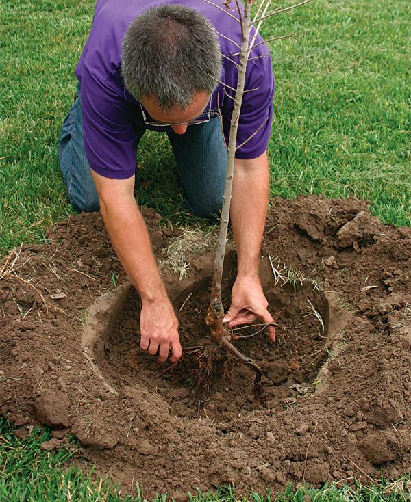 10 chores and garden ideas for spring hirerush blog for Planting a garden