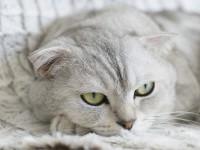 10 most essential pregnant cat care tips
