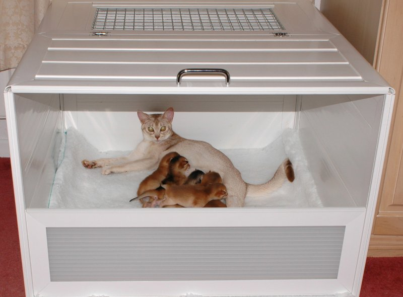 why cats urinate on furniture