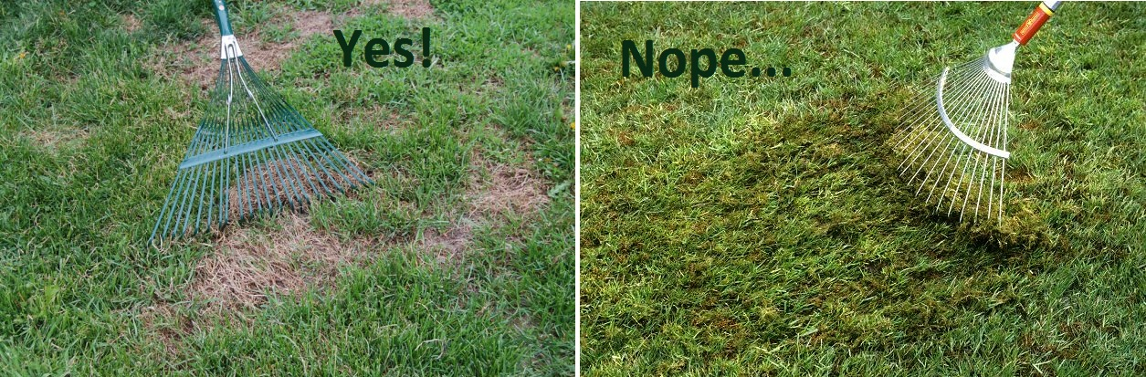 how to rake lawn spring yard clean up