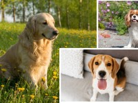 11 best dog breeds for first time owners